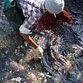 來自養殖場的海水魚,有誰可以讓您信任?