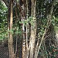 神奇的墨水樹