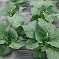 2010春季新菜