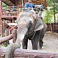跟著大象旅行去~~