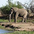 Hlane wild Zoo