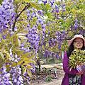 浪漫的紫色之春