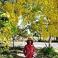 2015.5.18~20台南賞花之旅~台南高鐵阿勃勒黃金雨