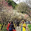 2017.2.18熱海梅園梅花祭