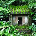 小粗坑古道九份侯硐山神廟小粗坑聚落小山國小像是抹茶瑞士捲的苔蘚