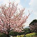 2009/03/14 天元宮