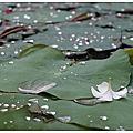 越南-跳到湄公河一定洗不清