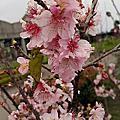 2015-0220 初二宜蘭金車蘭花園