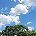 Titi Eco Resort'09