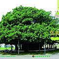 2012嘉減碳創刊號