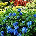 2018夏。京都紫陽花見自由行─旅程總印象