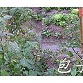 47-竹北市民農園_淹水瞭_