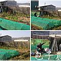 49-竹北市民農園_再度挑戰黑網子