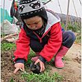 52-竹北市民農園_寶貝蛋