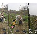 48-竹北市民農園_春季蔬菜豋場