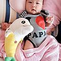 蕉香海豚寶寶