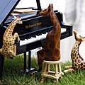 長頸鹿日本繪本攝影系列