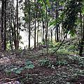 中寮-肖楠巨木林景點旁1甲農地