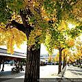 2015京阪紅葉-久違姬路城、別有洞天如夢似幻好古園