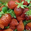 990119大湖採草莓