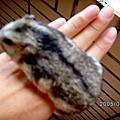 §第二批鼠寶寶出生紀實§