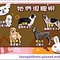 ☆0221☆2011狗用品年鑑