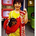 ☆0328☆臘腸犬用品特搜