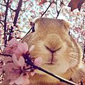 可愛兔子 桌布