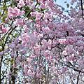 ♥2013・春・關西(京都、大阪、神戸、奈良)♥