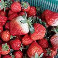 130210大湖採草莓