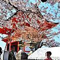 日本京都-清水寺