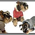 狗狗的衣想世界