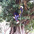 2012蘆洲李宅大樹遊樂園