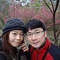 公館協雲宮超美櫻花20160220