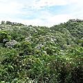 2012油桐花