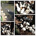 20131201 桃園新屋活力農場