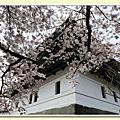 松前城櫻花