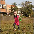 20160109--新埔採黃豆