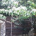 香格里拉樂園