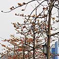 2013士林官邸玫瑰花展....3/18