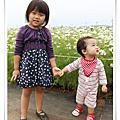 2011新社花海(花毯節)