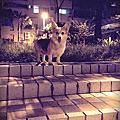 [寵物]狗女兒LUKA