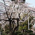 1104大阪城公園