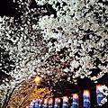 전해벚꽃2012.04