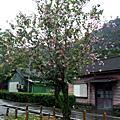 [出遊] 0216。 雨天的林田山