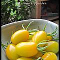 My Garden‧自己種ㄉ番茄比較甜