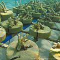 珊瑚農場 Coral Farm