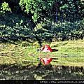 【國境之湖】加羅湖~仙女打碎鏡子而成的湖泊