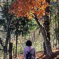 20171223【人客照.新竹】司馬庫斯