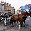 歐洲捷克奧地利960619